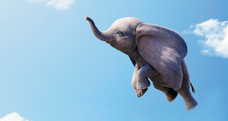 An Elephant Never Forgets?