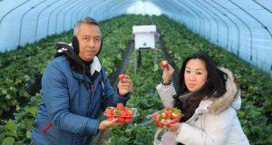Springtime in South Korea: Strawberry Picking